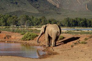 Elefantencamps in Asien, Elefantenreiten, Elefanten Tourismus