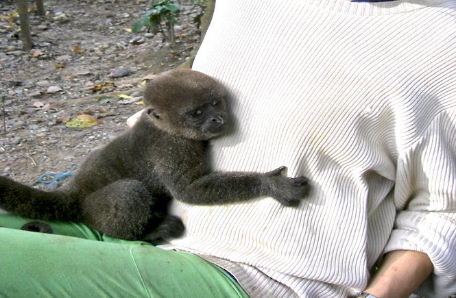 Als Affenmama im Dschungel von Ecuador