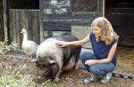 Hängebauchschwein Tierschutz Lebenshof