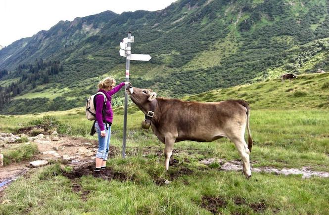 Kuh Tierschutz Nutztiere