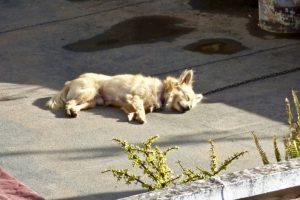 Tiere Angeketteter Hund Tierschutz Haustier