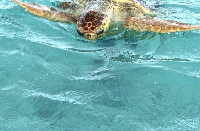 Schildkröte Tierschutz Mikroplastik