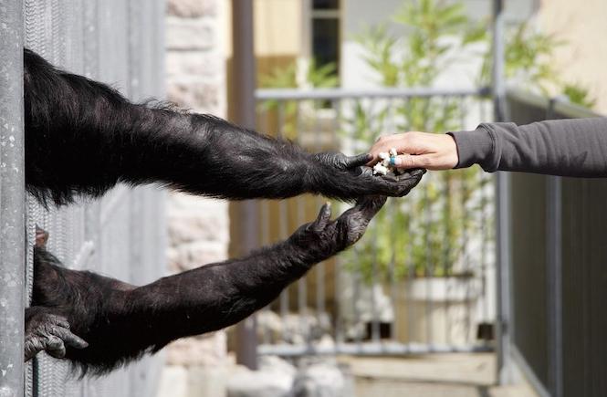 Tiere vegan Zoo Affe Wildtiere Zirkus