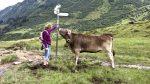Kühe Tierschutz Fleisch Rindfleisch Tiere Weide Milch