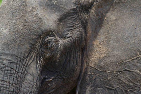Zoo: Paradies für Kinder, aber nicht für Tiere
