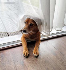 Hund Haustier Tierschutz