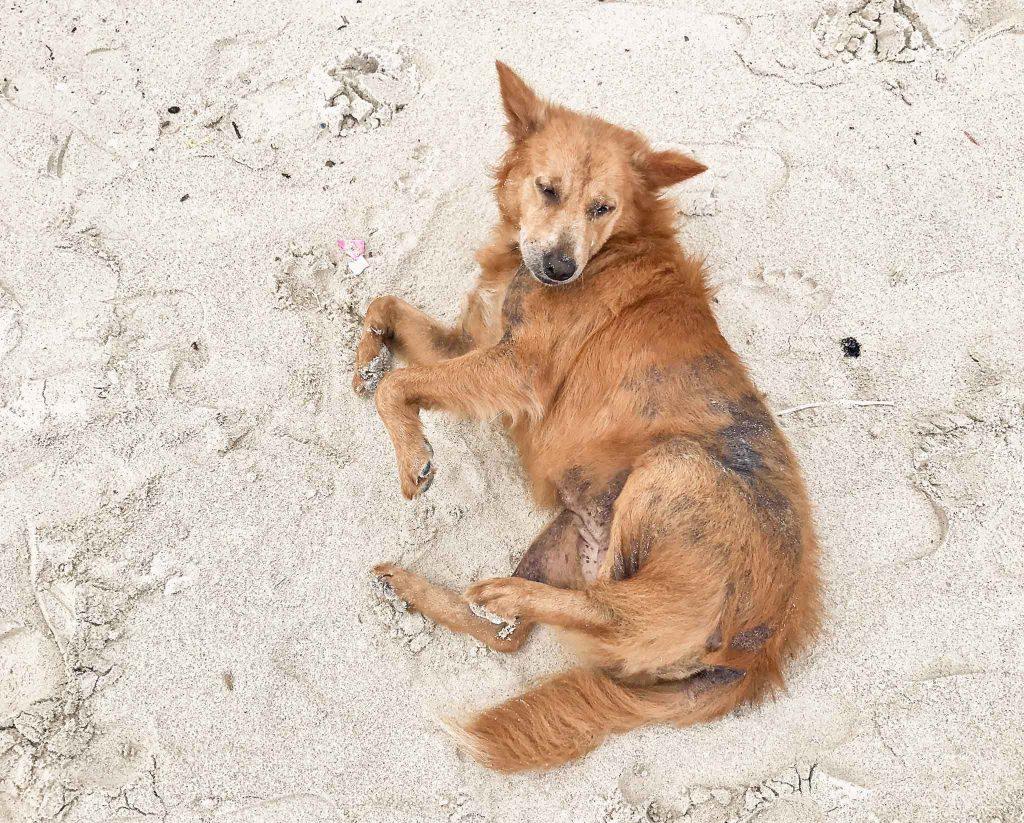Tierschutz Hund Tierheim Thailand