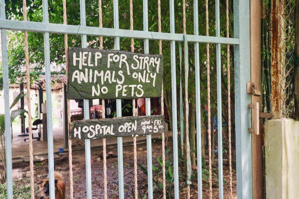 Tierheim Thailand Tierschutz