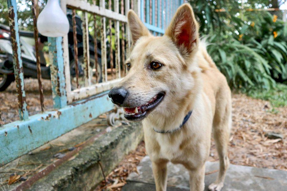 Tierheim in Thailand Hund Tierschutz