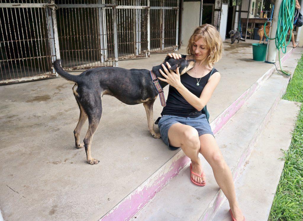 Hunde in Not Tierheim in Thailand