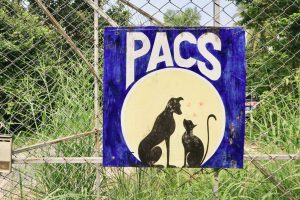 Tierheim in Thailand PACS