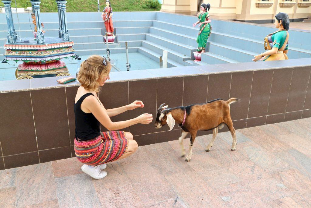 Ziege Tierliebe Tempel