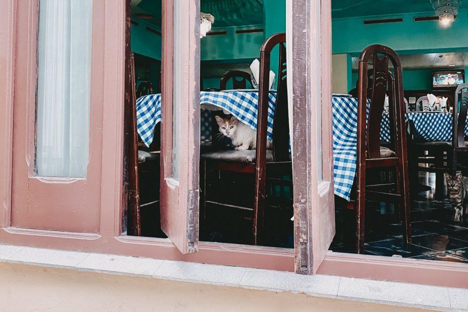Vegan in Kuba Tierschutz reisen