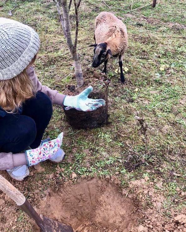 Schafe Tierschutz Heilbronn Tieren helfen
