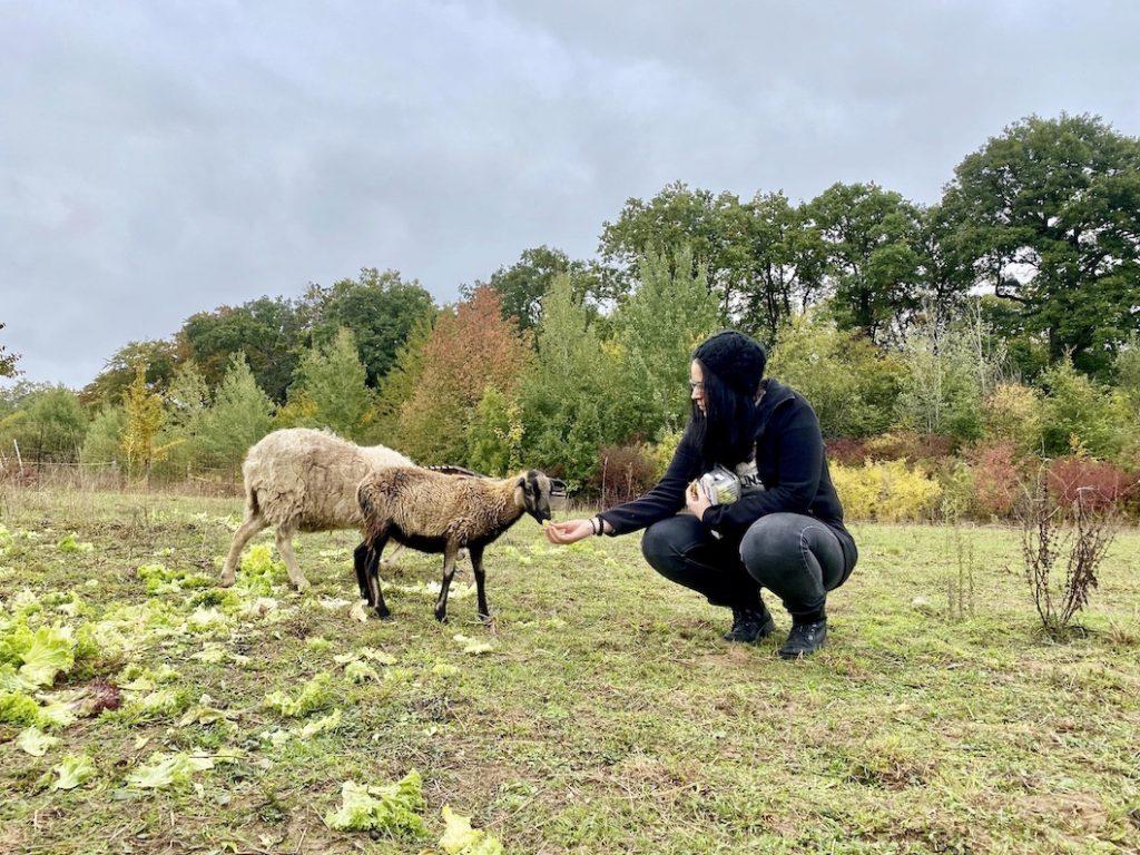 Grenzenlose Tierhilfe Schafe Tierschutzverein Neckarsulm
