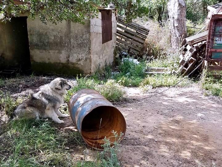 Kettenhund Kreta Hunde helfen Tierschutz