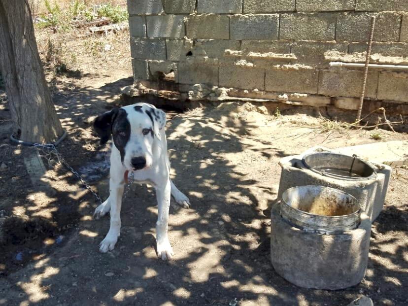 kleiner Hund Kreta Tierschutz Kettenhunde